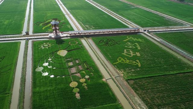 优质水稻种植基地.png