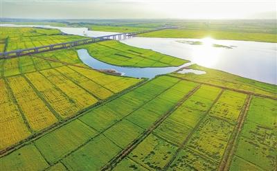 黄河金岸,鱼米之乡。本报记者  季正  摄